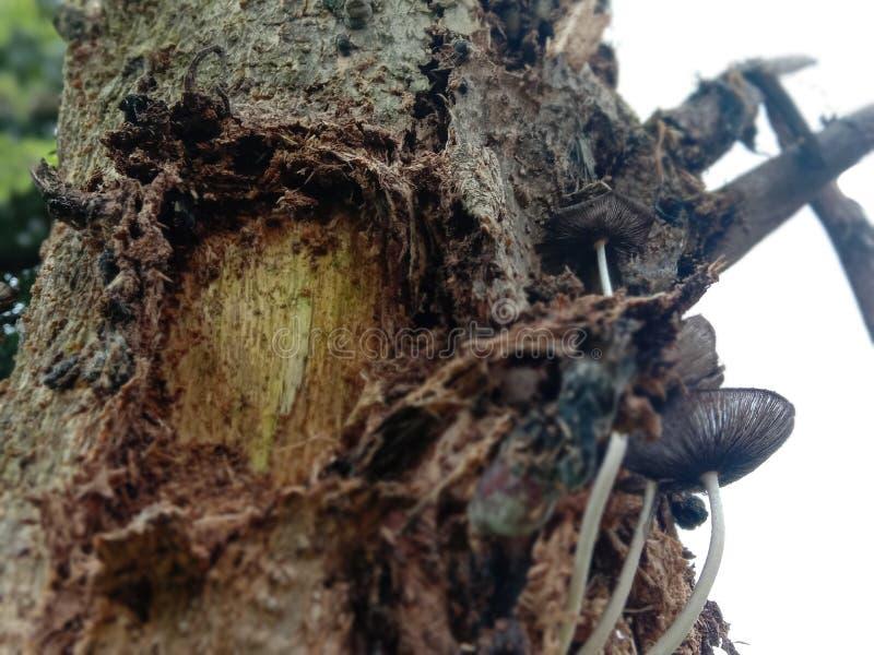 Mushrooms in trees stock photo