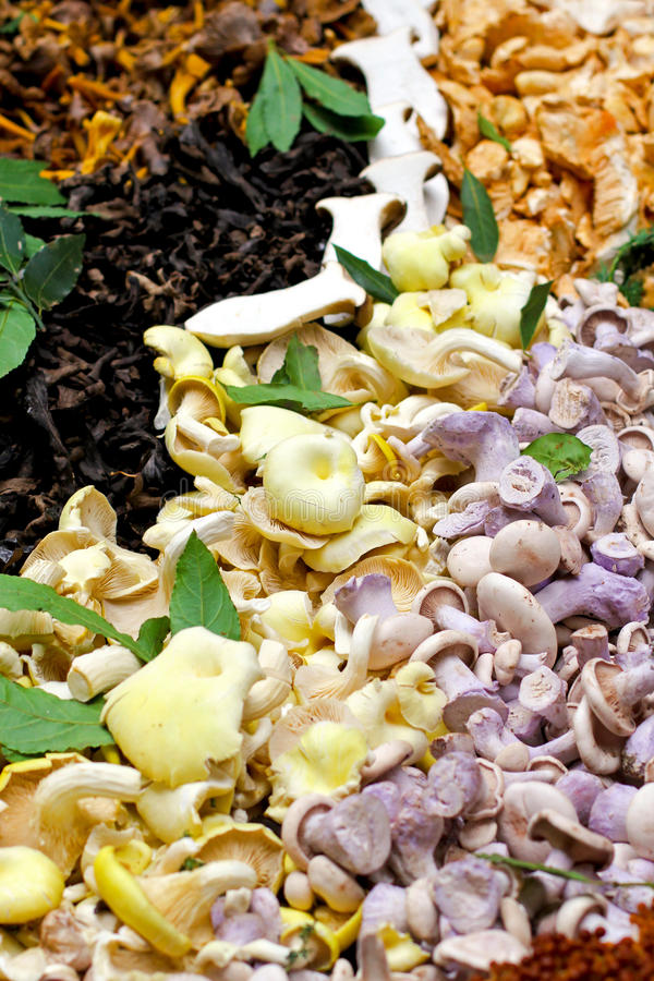 Mushrooms variety royalty free stock image