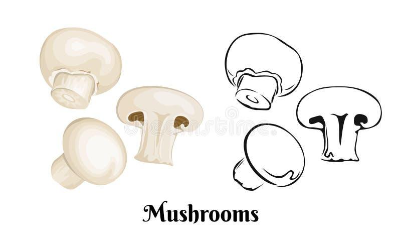 Mushrooms vector illustration. Champignon isolated stock illustration