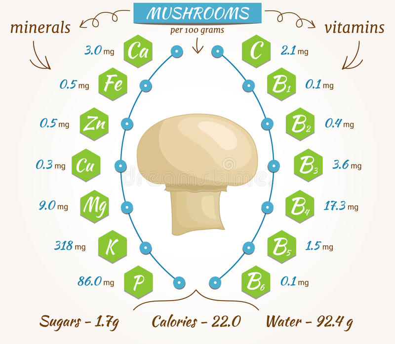 Mushrooms vector infographics. The content of minerals and vitamins in fresh champignon mushroom. Illustration about nutrients, vegetables, health food, diet royalty free illustration