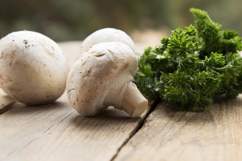 Mushrooms with vegetables on a wooden background. stock photos