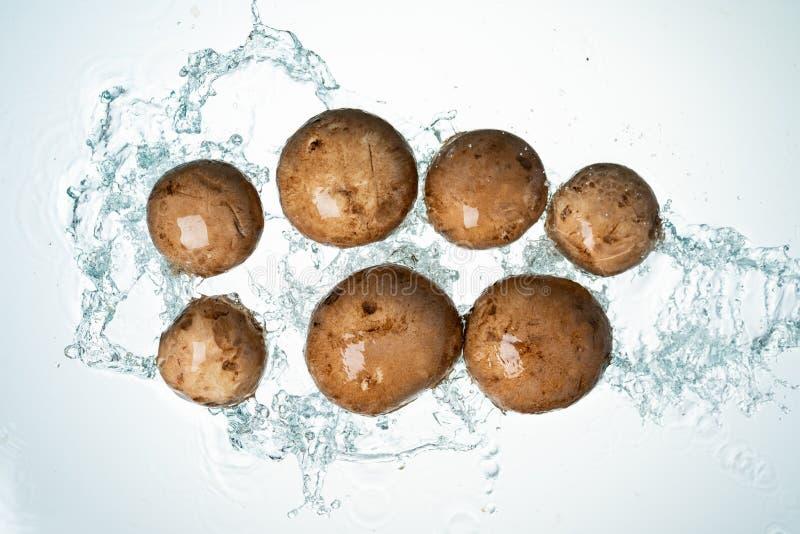 Mushrooms Water Splash stock images