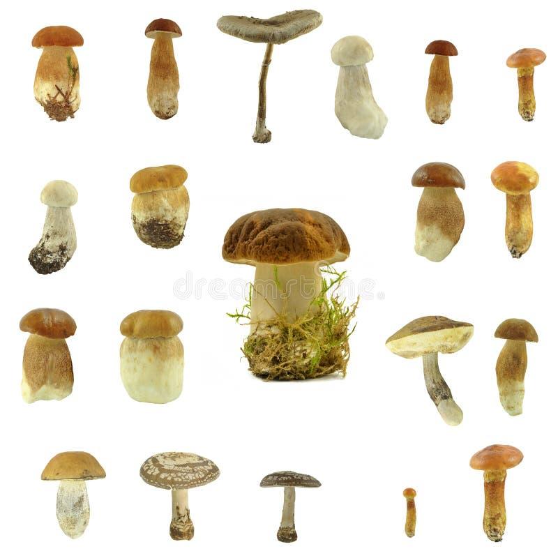 Mushrooms. On a white background stock image