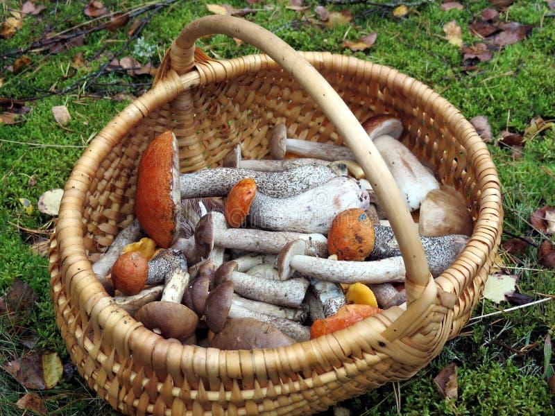 Mushrooms in wicker. Various mushrooms in wicker pick in forest stock photos