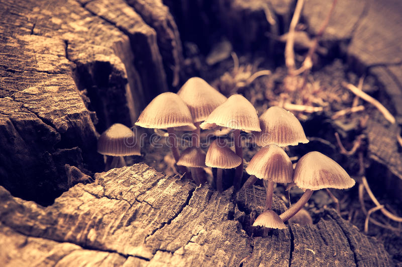 Download Mushrooms stock photo. Image of wood, forest, funghi - 32887336