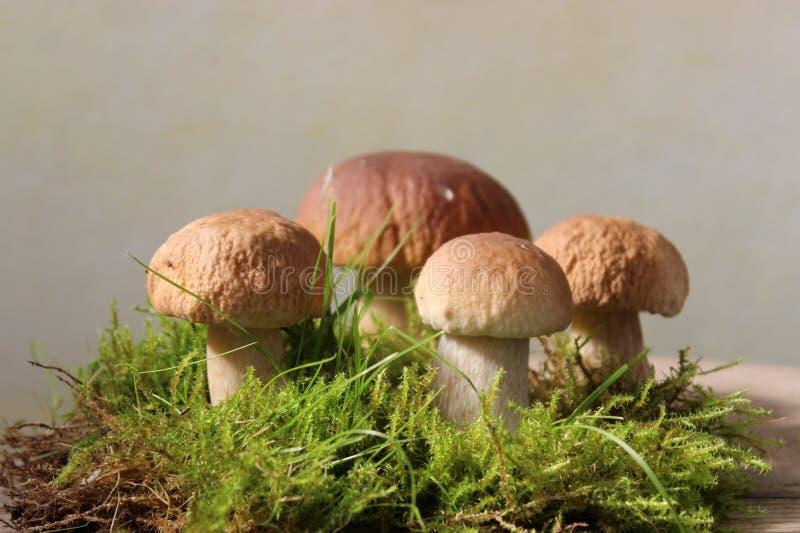 Download Mushrooms stock image. Image of fungus, edible, gills - 44344779
