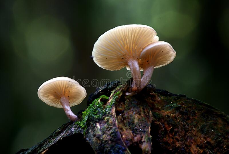 Mushrooms on wood stock photography