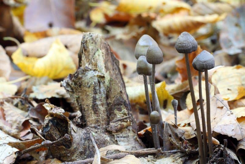 Download Mushrooms In Wood. Macro Stock Photo - Image: 22880360