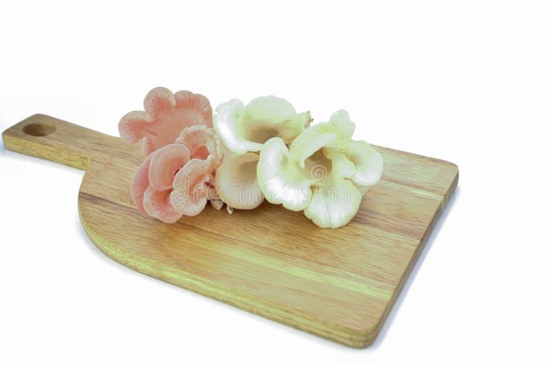 Mushroon. Organic Pleurotus djamor or pink oyster mushroom growing on mushroon loaf on white background stock photo