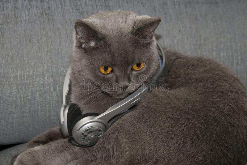 Music cat royalty free stock photo