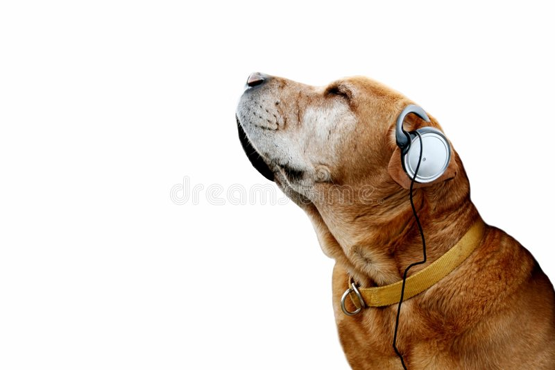 Music dog royalty free stock photo