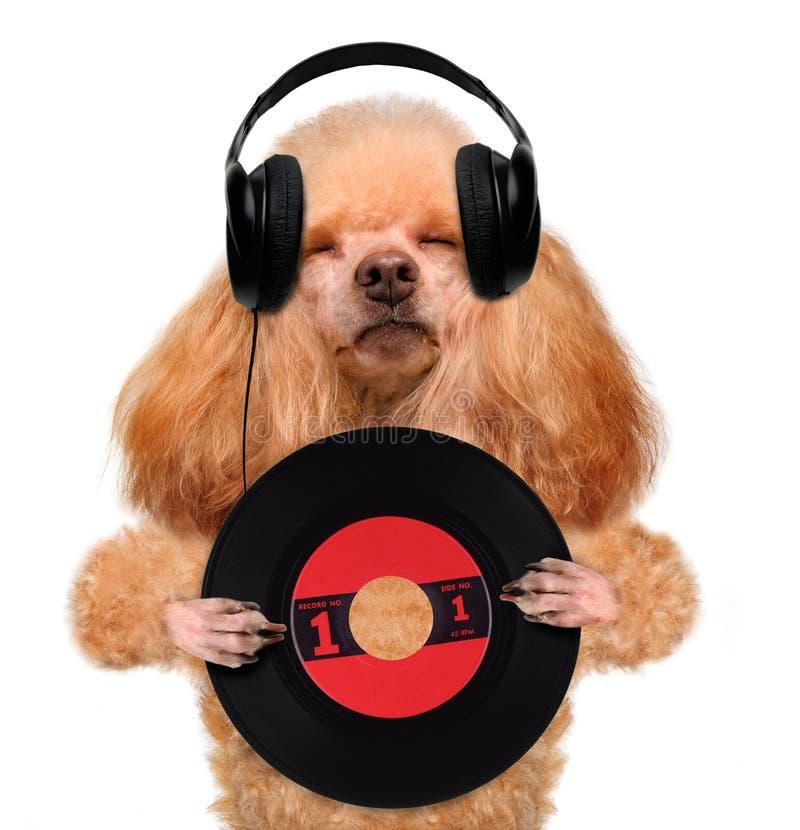 Music headphone vinyl record dog stock photo