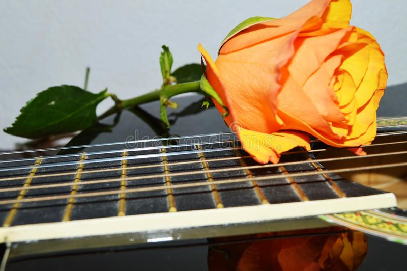 Music and rose, close-up stock photo