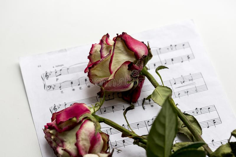 Music sheet and dead roses. The idea of the concept for love of music, for the composer, musical inspiration. Close up image stock image