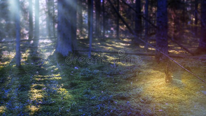 Musica di notte Foresta mistica alla notte Scena scura con la luce di luna fotografia stock