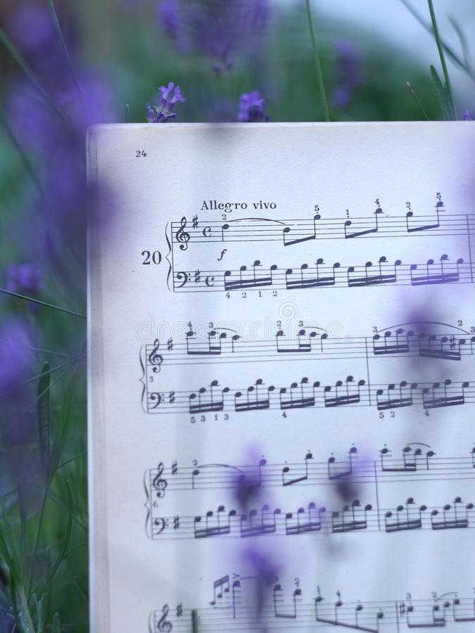 Musical notes among lavender flowers stock photo
