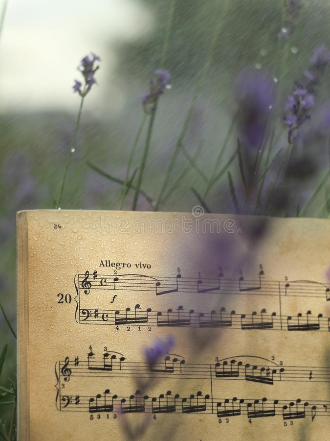 Musical notes among lavender flowers royalty free stock photo