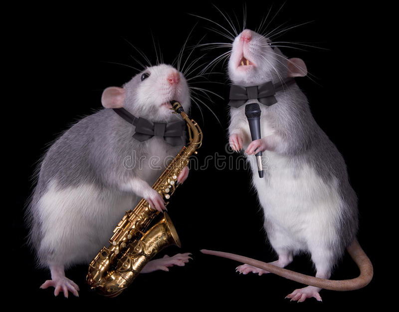 Download Musical Rats stock image. Image of performance, musical - 10559681