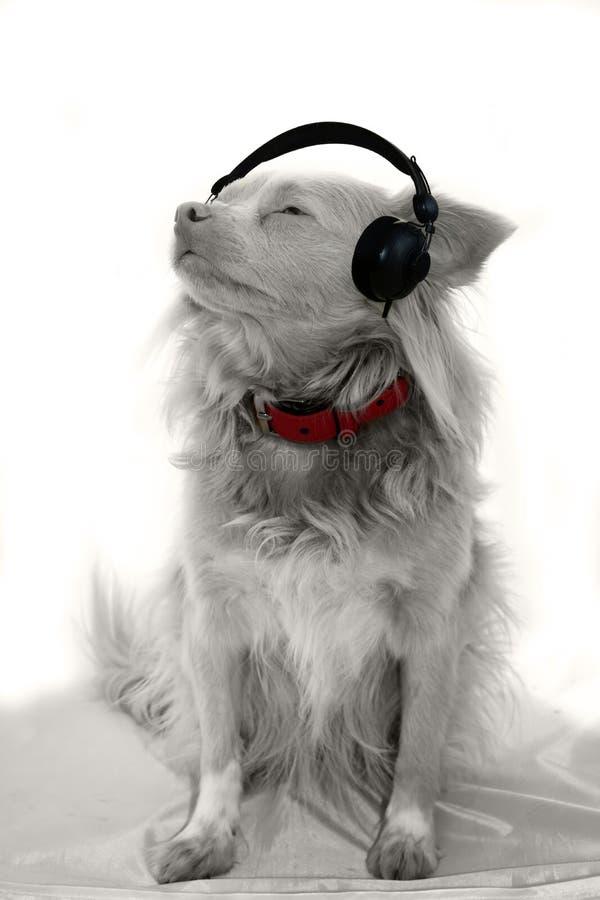 Musik för io för albinohund lyssnande arkivbild