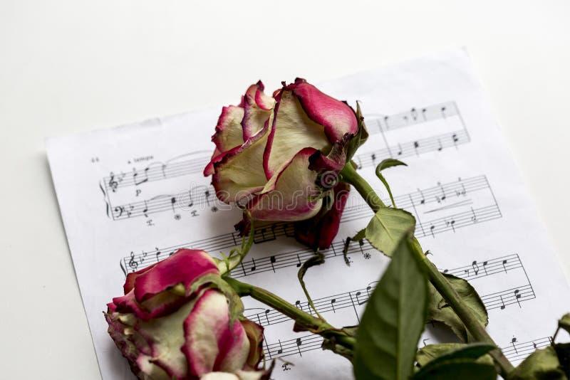 Musikblatt und tote Rosen Die Idee des Konzeptes für Musikliebe, für den Komponisten, musikalische Inspiration stockbild