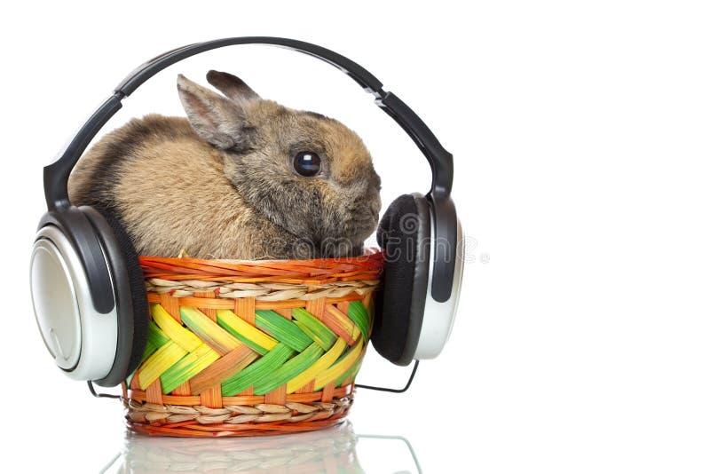 Musique mp3 de écoute de lapin de Pâques sur des écouteurs photographie stock libre de droits