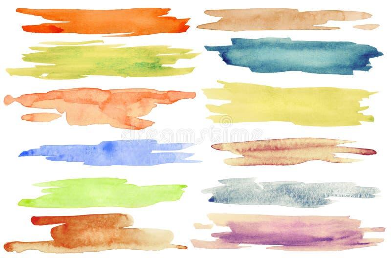 muska akwarelę ilustracji