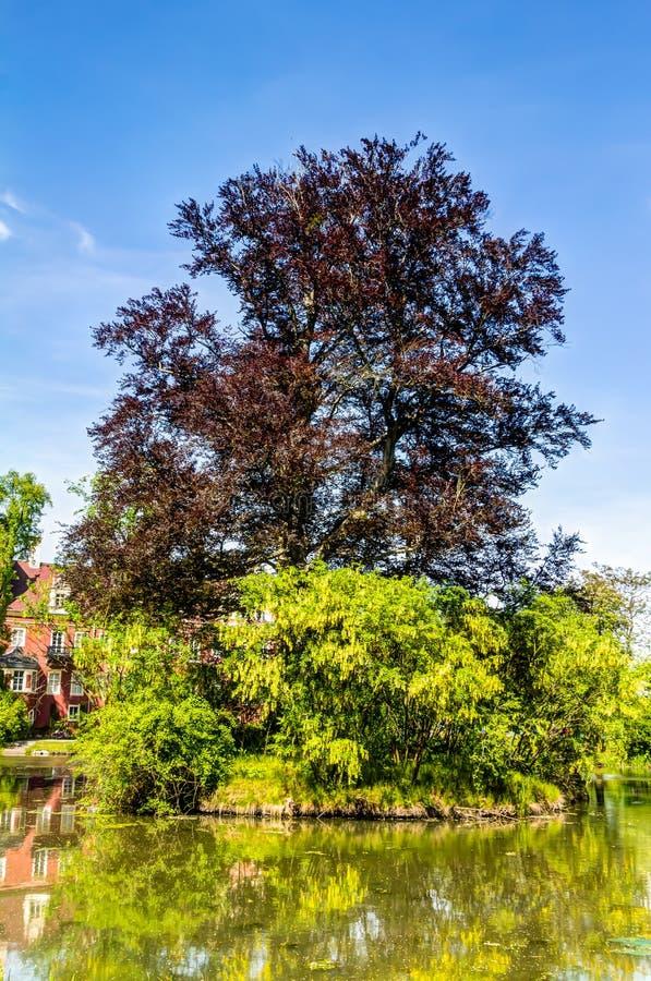 Muskau Park in the Upper Lusatia stock photos