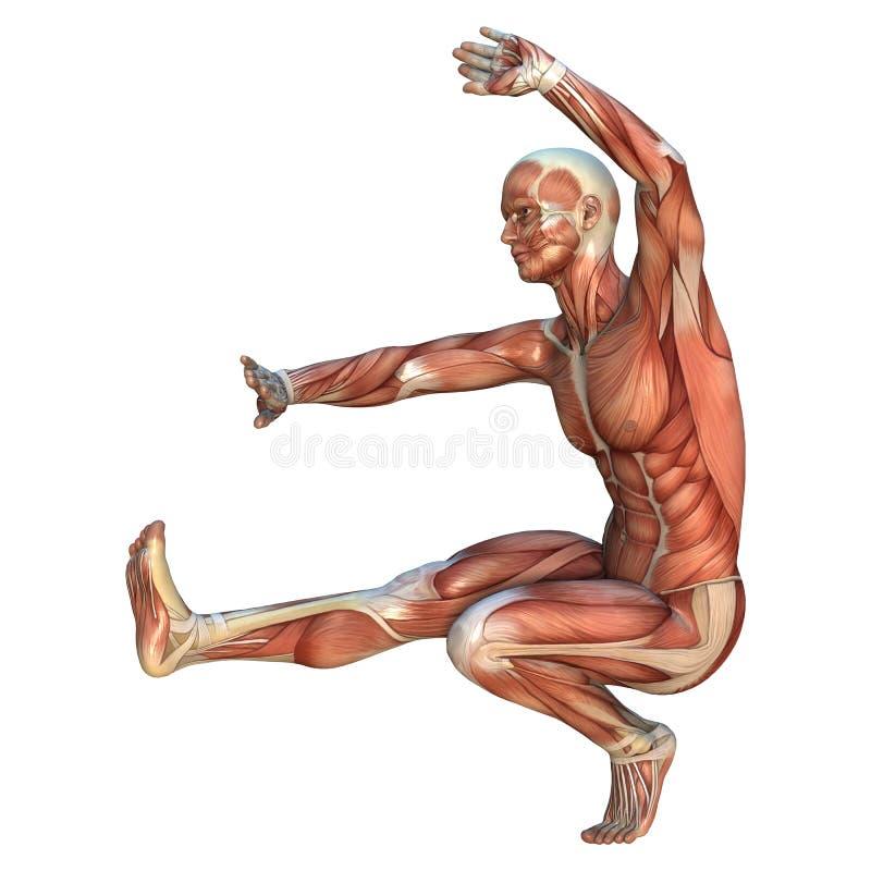 Muskel-Karten lizenzfreie abbildung