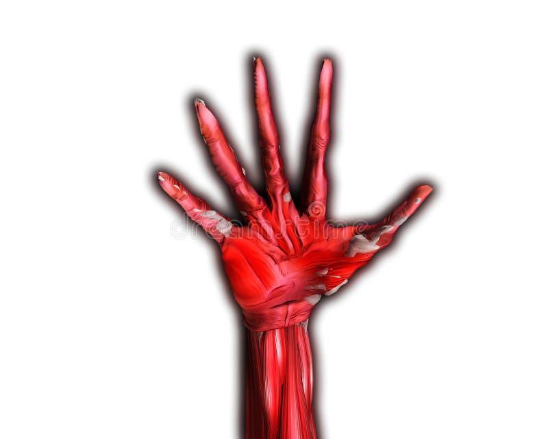 Muskel-und Knochen-Hand stock abbildung. Illustration von halloween ...