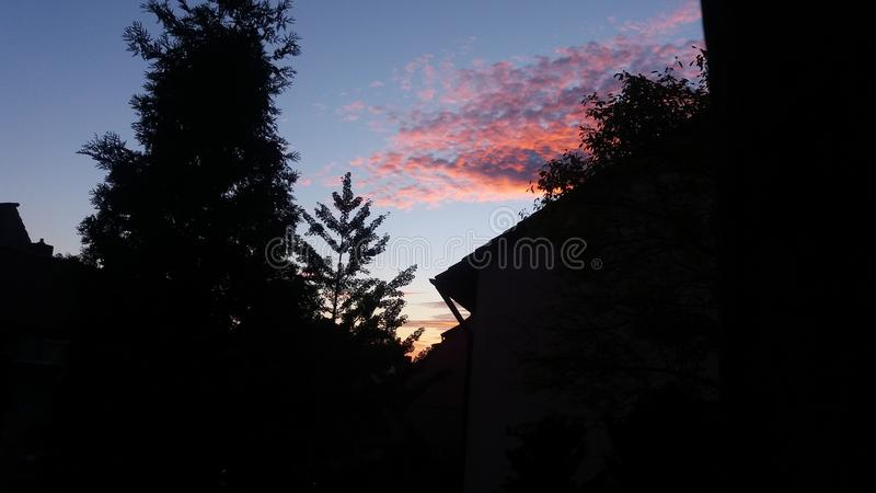 Muskelgeckohimmel images stock