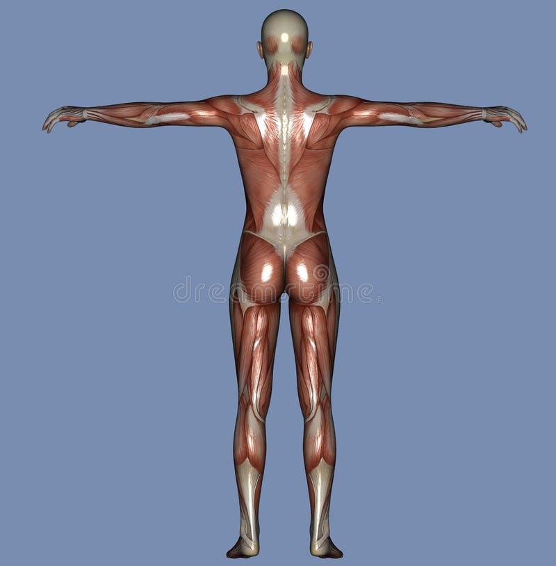 Gemütlich Menschlicher Körper Tabelle Fotos - Anatomie und ...