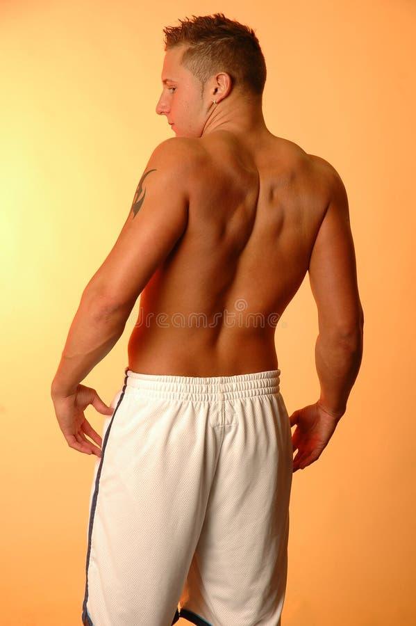 Muskelrückseite stockfotografie