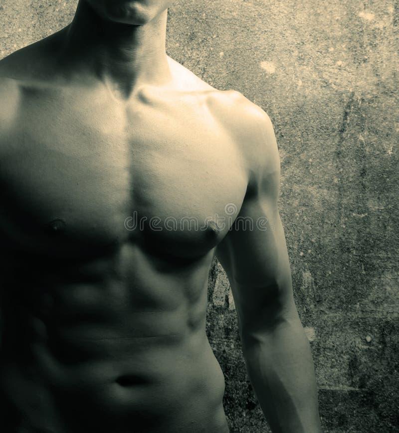 muskler royaltyfri fotografi