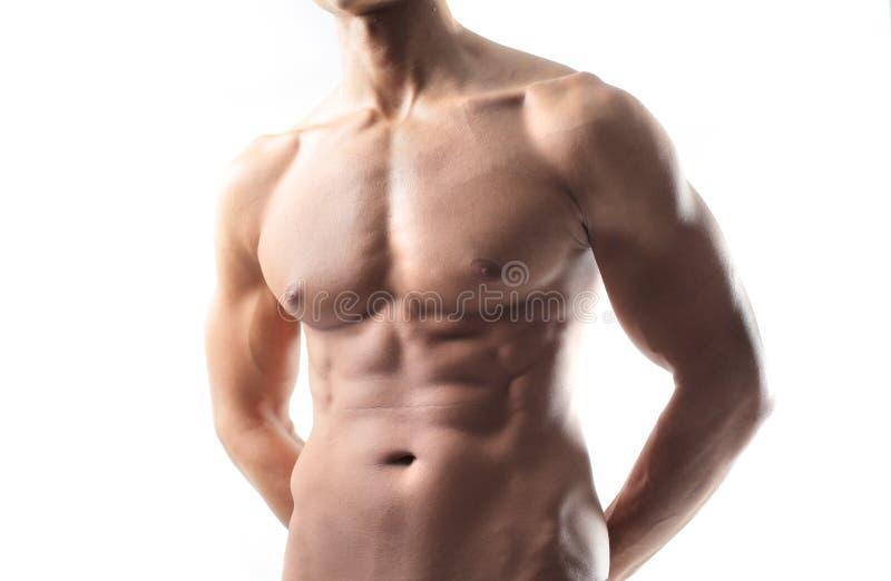 muskler fotografering för bildbyråer