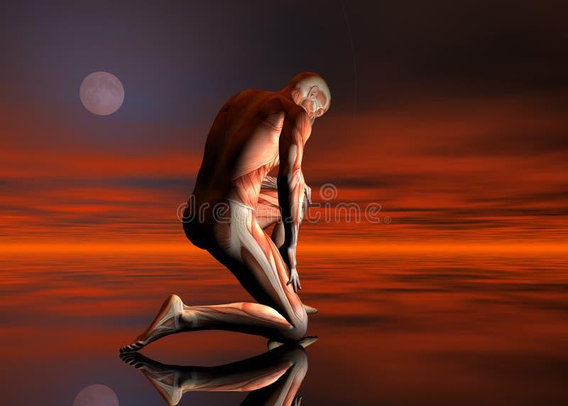 muskler stock illustrationer