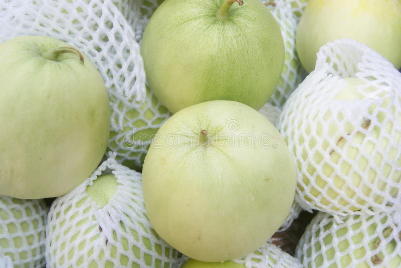 Muskmelon. Fresh muskmelon to sell in the market. A close-up of the muskmelon stock images