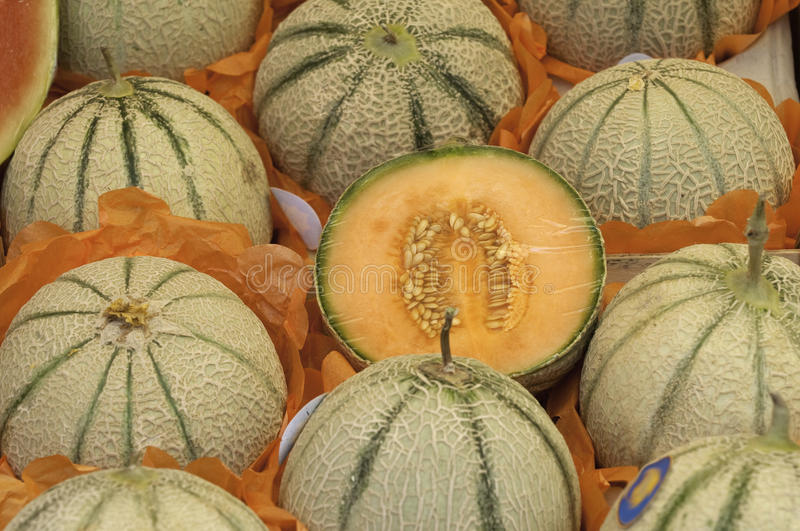 Muskmelons stock photography