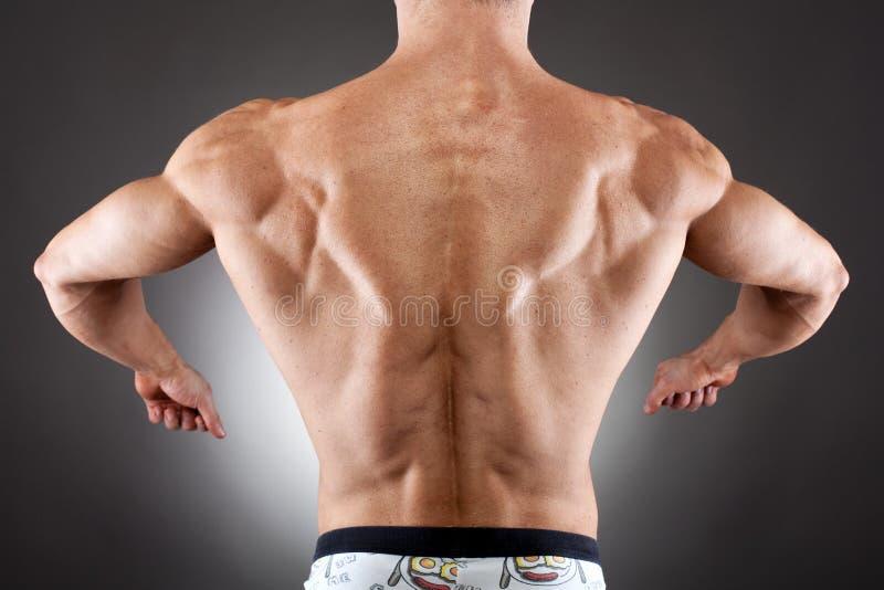 Muskulös back arkivfoton