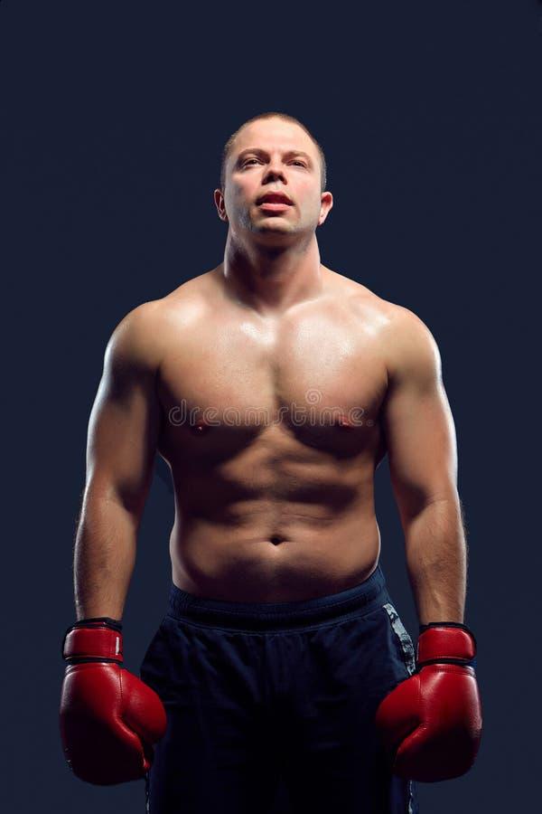 Muskulös man - ung caucasian boxare royaltyfria foton