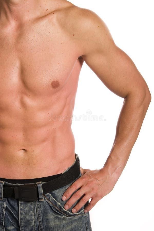 muskulös manlig arkivbilder
