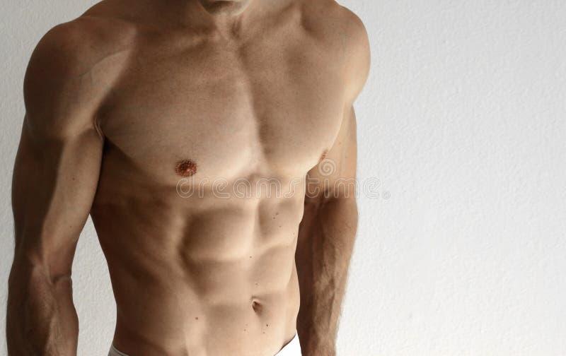 muskulös torso fotografering för bildbyråer