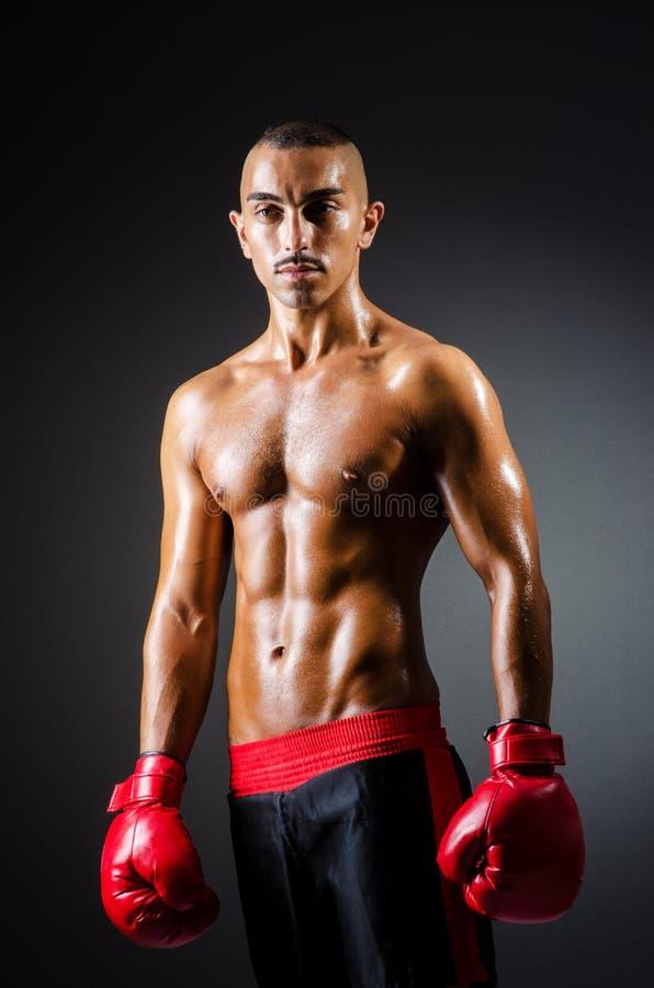 Muskulöser Boxer Stockbilder