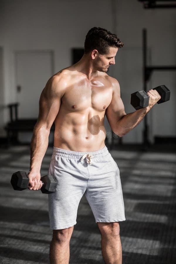 Muskulöser ernster Mann, der Gewichtheben tut lizenzfreie stockfotografie