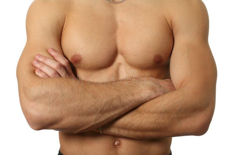 Muskulöser männlicher Torso lokalisiert auf Weiß stockbilder