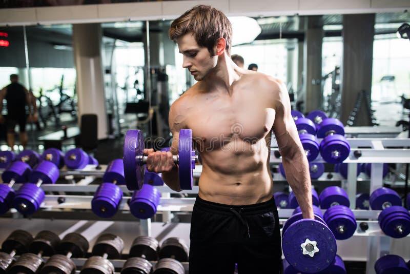 Muskulöser Mann, der in der Turnhalle tut Übungen mit Dummköpfen, männliche nackte Torso-ABS des Bodybuilders ausarbeitet Eignung lizenzfreies stockfoto
