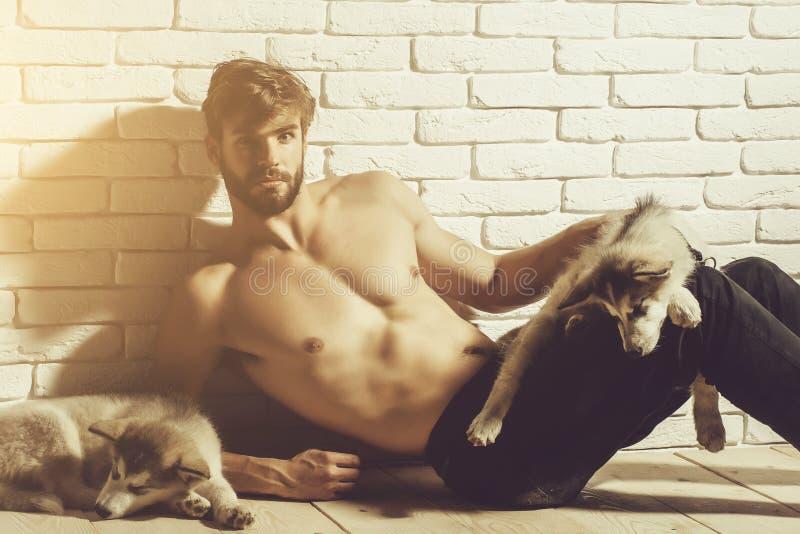 Muskulöser Mann mit sexy Körper hält heisere Hunde, Welpenhaustiere stockfotos