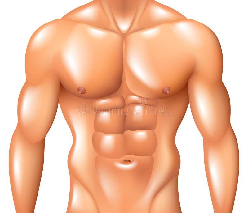 Muskulöses Manntorso-Eignungskonzept lokalisiert auf weißem Vektor vektor abbildung
