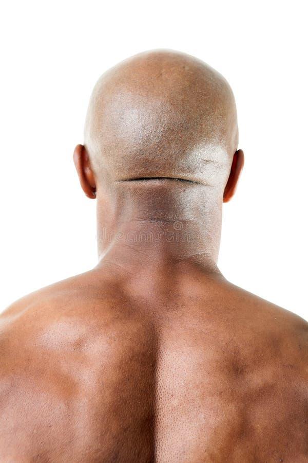 Muskulöst Mans tillbaka av huvudet royaltyfri fotografi