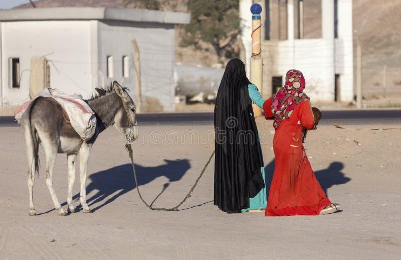 Muslim women wearing hijabs are leading donkey stock photo