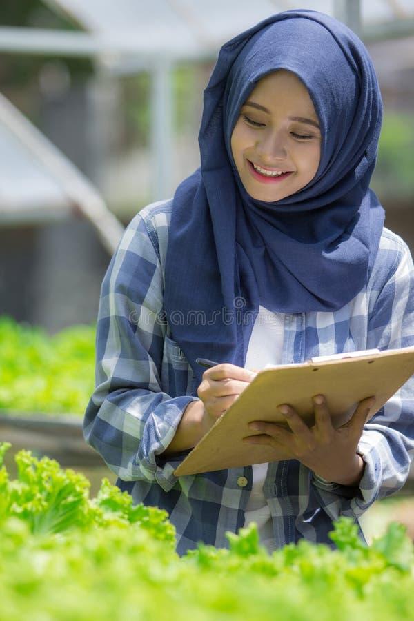 Muslimsk kvinna som arbetar i hydrophonic royaltyfri foto